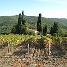 Languedoc again by Corinne Pouzet