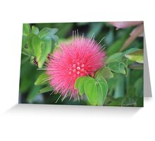 Simple Pink Spring Wildflower Greeting Card