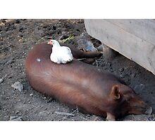 Piggy Back Photographic Print