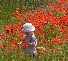 A Poppy For Mummy by Lynne Morris