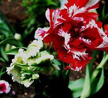 Beauty of the Tulip by nadinecreates