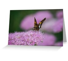 Butterfly on Autumn Sedum Greeting Card