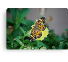 Butterfly on Snapdragon Canvas Print