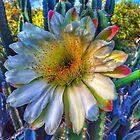 Morning Splendor, Tucson Arizona by Terry Temple