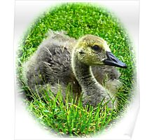 Fuzzy little goose baby Poster