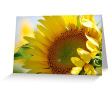Kansas Sunflower Greeting Card