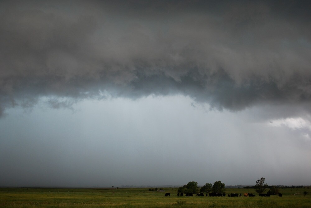 Stormy Kansas Sky with Cows by Suz Garten