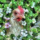Little hen by jeanniechris