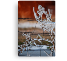 Ice on Weed Canvas Print