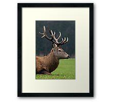 Profile Of A Red Deer Stag - (Cervus elaphus) Framed Print