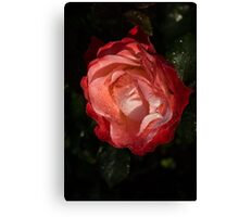 A Wonderful Cream-and-Red Rose With Dewdrops Canvas Print