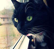 Magyk - Tuxedo Kitten by KaylaKarma
