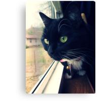 Magyk - Tuxedo Kitten Canvas Print