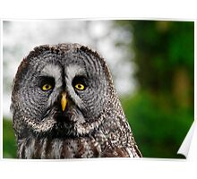 Great Grey Owl, Strix nebulosa Poster
