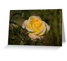 Golden Yellow Sparkles - a Fresh Rose With Dewdrops Greeting Card