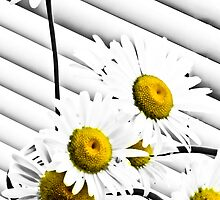 daisy by Theodore Black