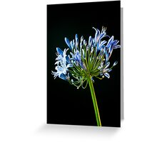 Agapanthus in Blue Greeting Card