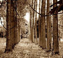 Woodland by Simon Lindsay