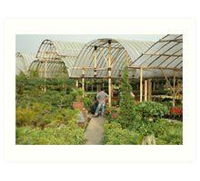 flower plantation Art Print