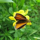Orange Butterfly by emilymhanson