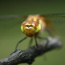 Dragon Fly up close by SKNickel