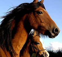 Welsh Ponies Mother and daughter by TesniJade