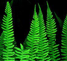 Fab Ferns by BevsDigitalArt