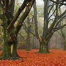 Dreaming of a cool autumnal forest by jchanders