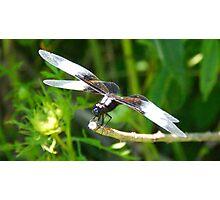 Bug Goggles Photographic Print