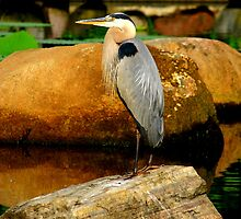 Bird on a rock in a pond. by Brent McMurry