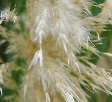 Pampas Grass by WildestArt