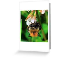 Bee On Flower 0025 Greeting Card