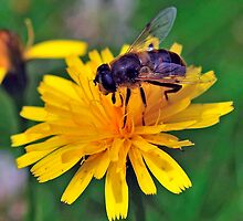 Bee On Flower 0026 by mike1242