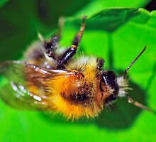 Bee On Flower 0028 by mike1242