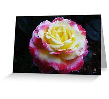 Blushing yellow rose... Greeting Card