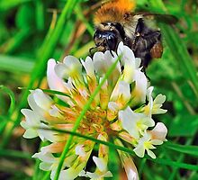 Bee On Flower 0040 by mike1242