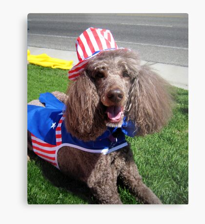 Yankee Doodle Poodle Metal Print
