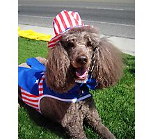 Yankee Doodle Poodle Photographic Print