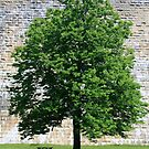 Tree at Croton Dam by CMCetra