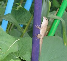 Lizard in a garden by ValeriesGallery