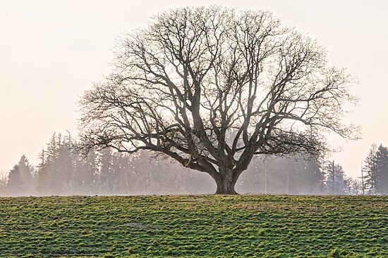 The Lone Oak 2 by Deri Dority