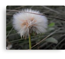 Crying Dandelion Canvas Print