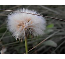 Crying Dandelion Photographic Print