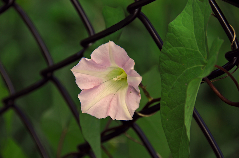Miss Morning Glory by jules572