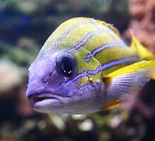 Inquisitive Fish by bluefishrun