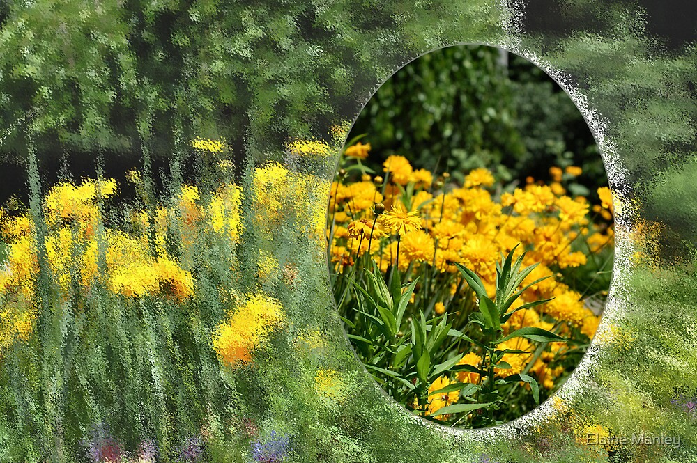 Field of Yellow  by Elaine  Manley