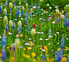 Wildflower Heaven by RavenFalls