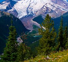 Rainier from Silver Forest by RavenFalls