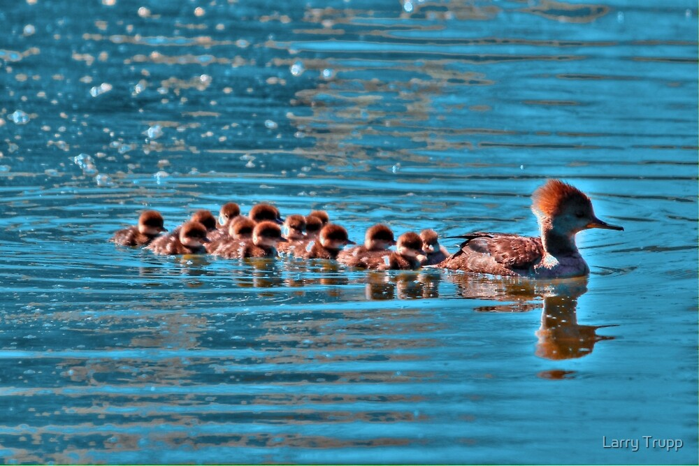 Merganser Family by Larry Trupp