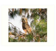 Fledgling - Great Horned Owl 2 Art Print
